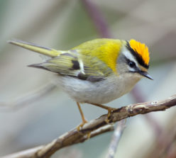Narrowboat Firecrest