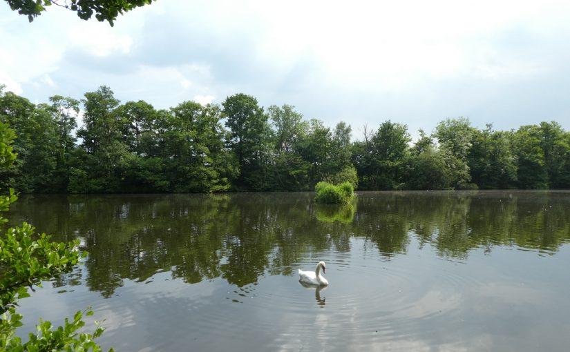 Fradley Pond