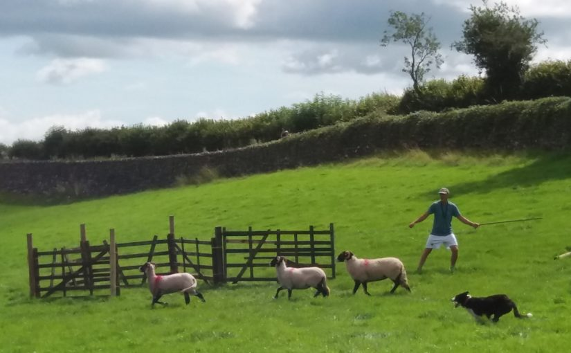 Sheep dog trials and family time
